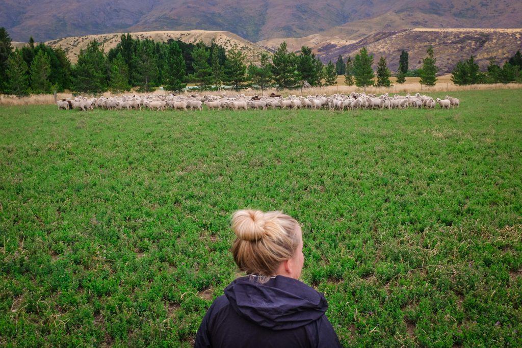 farmstay new zealand ajourneylife