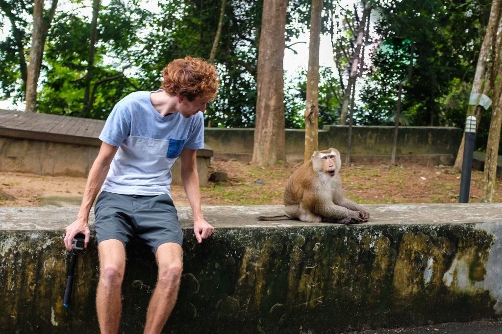 Monkey Hill 6