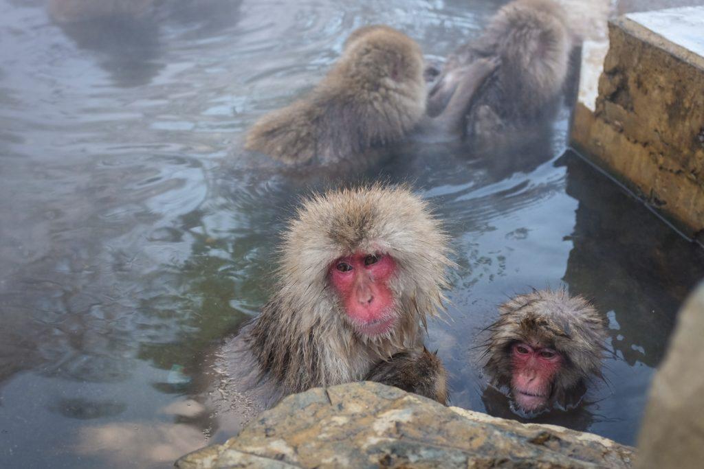 snow monkey nagano ajourneylife