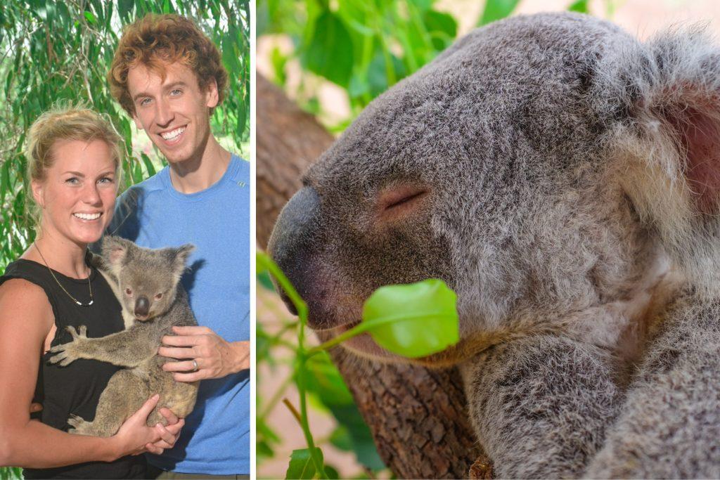 Koala ajourneylife